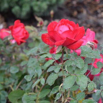 Rose Tote by NicksChick