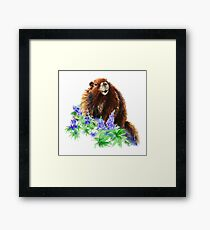 Marmot, Groundhog, Woodchuck,Watercolor Animal Framed Print