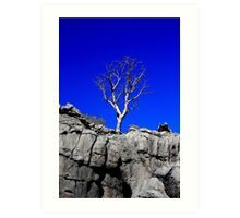 Boab tree. Art Print