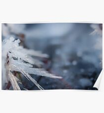 Looking Sharp frozen ice crystals photograph Poster