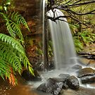 Ferns & flow at Girrakool by Michael Matthews