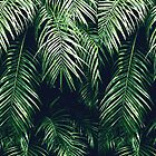 Tropical Palm Leaves by MyArt23