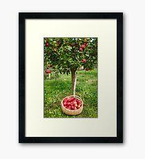 Full basket near apple tree Framed Print