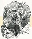 CavaChon Father & Son by BarbBarcikKeith