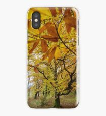 Deciduous forest in the autumn iPhone Case/Skin