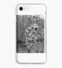 Thistles iPhone Case/Skin