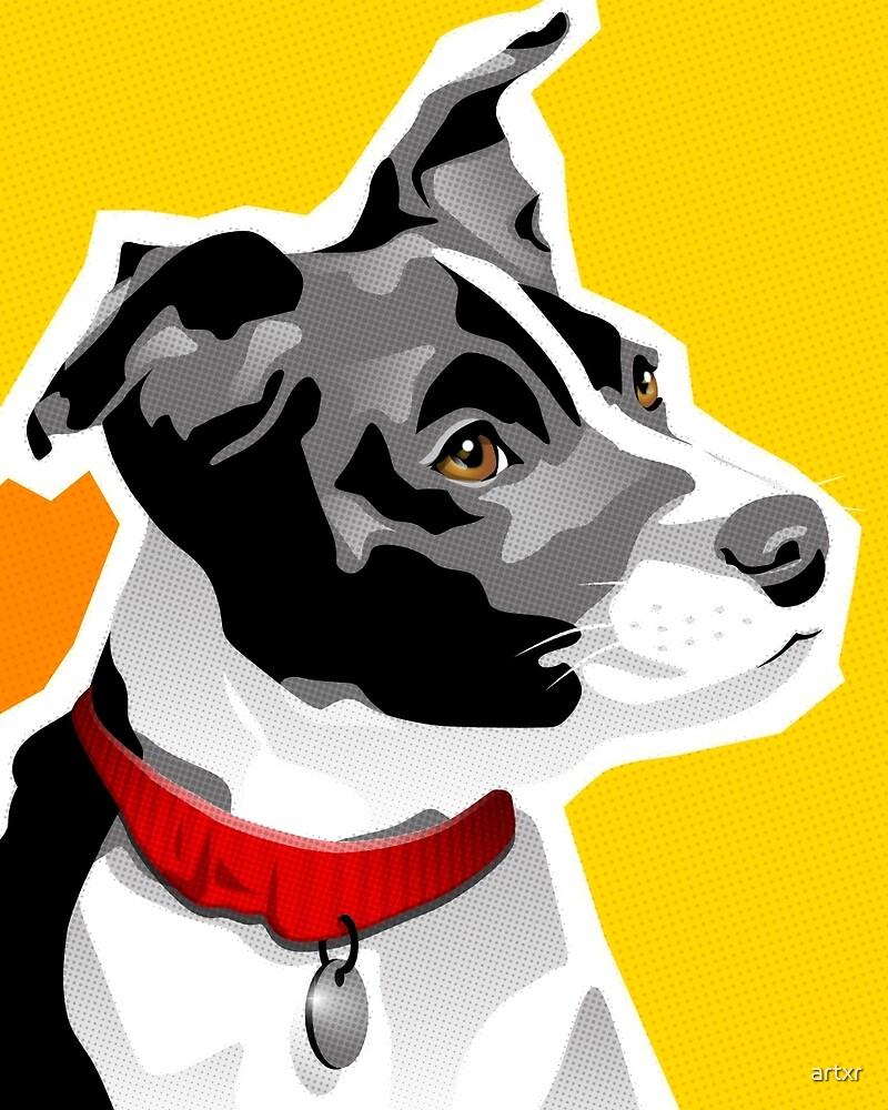SPEEDY - Boston Rat Terrier by artxr
