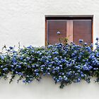 Fenster mit blauen Blumen von RebecaZum