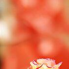 «Pequeña rosa amarilla» de RebecaZum