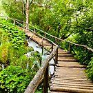 Wooden Walkway by Rae Tucker