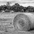 Hay Bales at Yan Yean by Pauline Tims