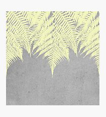 Concrete Fern Yellow Photographic Print