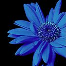 Blue ! by Elfriede Fulda