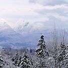 Winter Mountain Majesty by JOSEPHMAZZUCCO