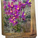 queen of sheeba WA native orchids by JuliaKHarwood
