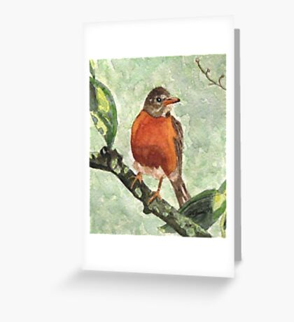 North American Robin Greeting Card
