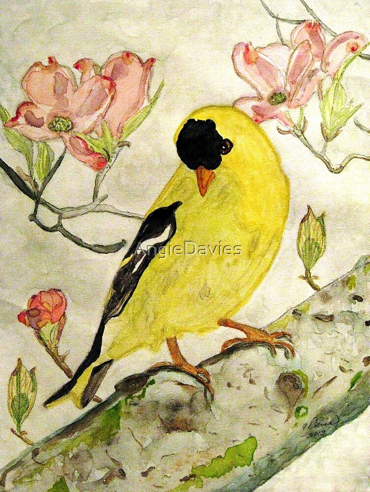 A Goldfinch Spring by AngieDavies