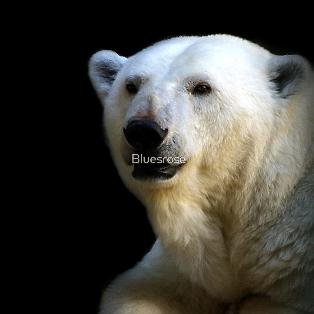Ice bear by Bluesrose
