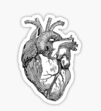 An anatomical heart Sticker