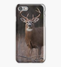 White-tailed deer buck with huge neck in autumn rut iPhone Case/Skin