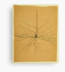 Pyramidal Cell in Cerebral Cortex, Cajal Illustration Canvas Print