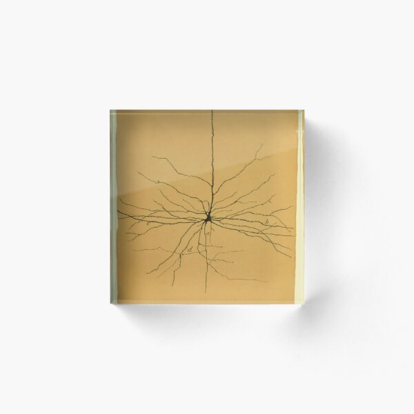 Pyramidal Cell in Cerebral Cortex, Cajal Illustration Acrylic Block