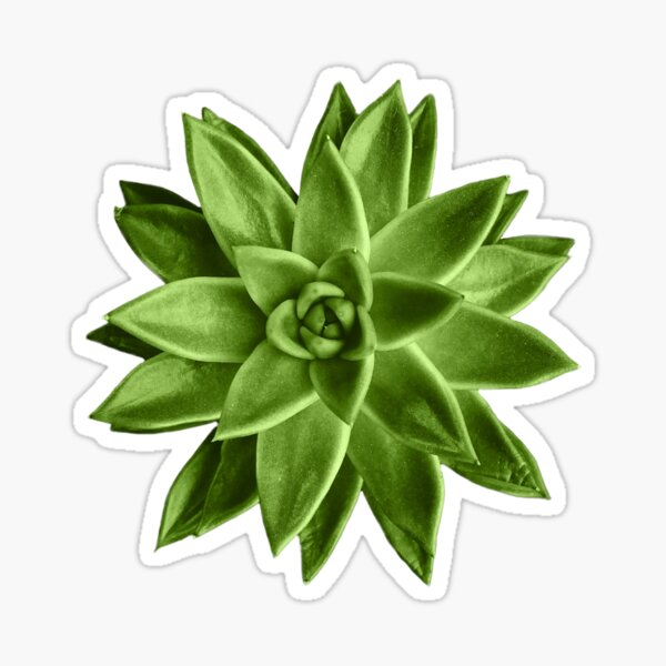 Greenery succulent Echeveria agavoides flower Sticker