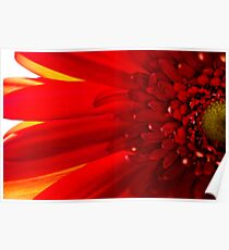 Red Macro Daisy Flower Poster