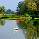 """"""" Swan Lake """" by Brian Bo Mei"""