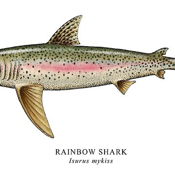 Rainbow Shark by CatLauncher
