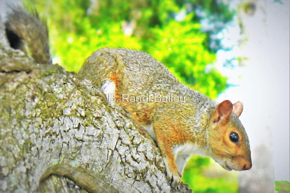 Park squirrel closeup by ♥⊱ B. Randi Bailey