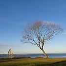 Tree South of Wättern by lennarrrt