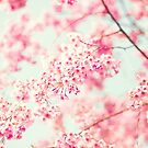 Cherry blossoms on white sky by Caroline Mint