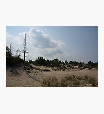 Sand dunes with a tree Photographic Print