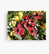 Floriade Flowers Canvas Print
