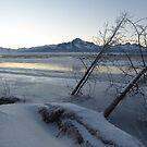 Palmer, Alaska - Frozen and Foggy Matanuska River by Jackie Muncy