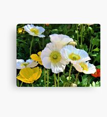 White Floriade Flowers Canvas Print