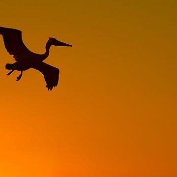 Flight of the Pelican by eyalna