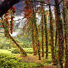 Enigma Trees by Igor Zenin