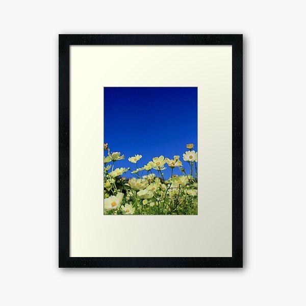 Lovely Yellow Cosmos Clear Blue Sky Flower Field Framed Art Print
