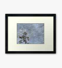 12.1.2017: Pine Tree in Blizzard Framed Print