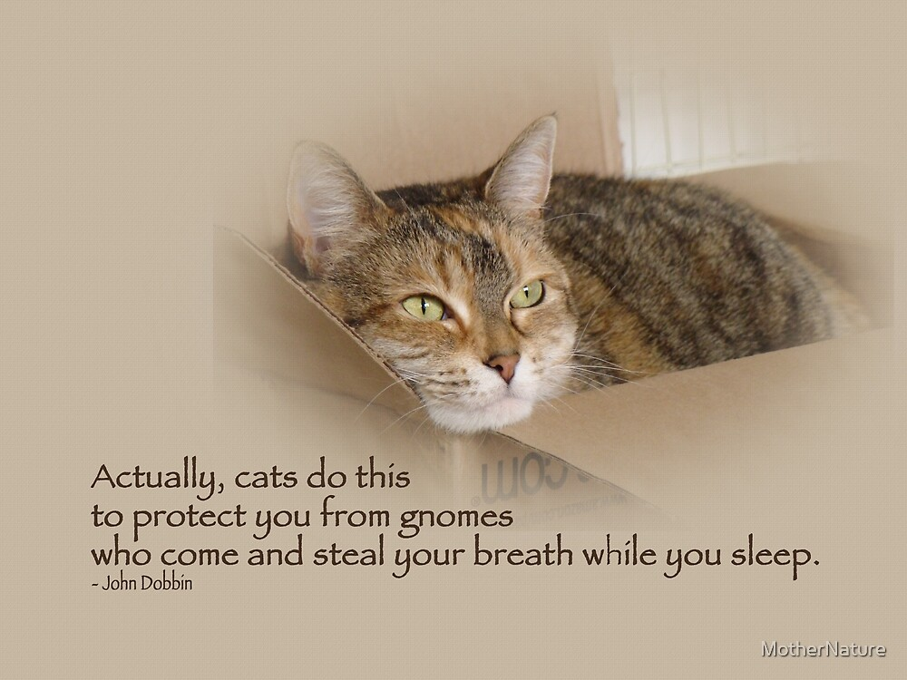Cats Protecting You From Gnomes - Lily the Cat by MotherNature