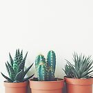 Potted Plants by Cassia Beck