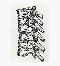 Skeletal - Spine Photographic Print