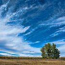 Blue Skies Sing Of Trees by Gregory J Summers