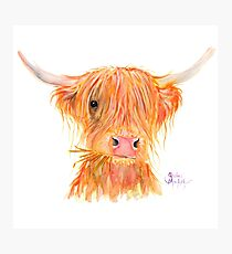 SCOTTISH HIGHLAND COW 'FERGUS' By Shirley MacArthur Photographic Print
