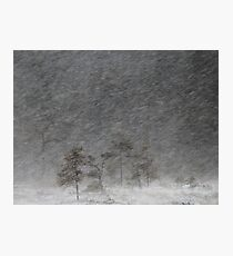 12.1.2017: Pine Tree in Blizzard III Photographic Print