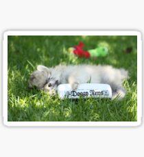 Stewie my puppy pomeranian Sticker