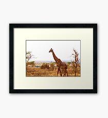 Graceful Giraffe Framed Print