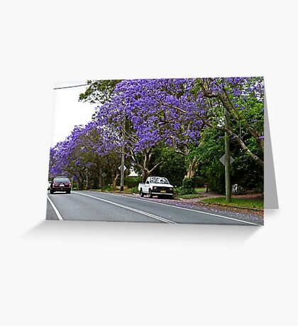 Jacaranda In Bloom Greeting Card
